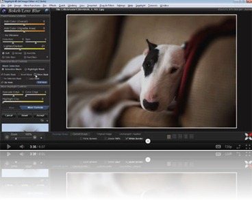 bokeh-dog-videothumb